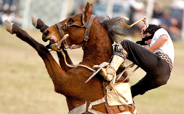 elegant equestrian helmet